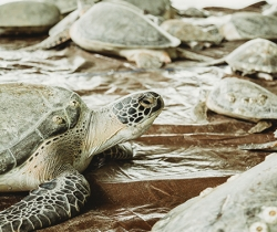 How South Padre Island Convention Center Helped Save Thousands of Sea Turtles